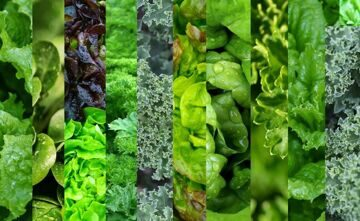 Mixed-Greens-2-1024x631-1